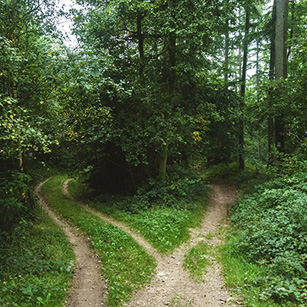 photo-two-paths-green-forest-leaves-nature